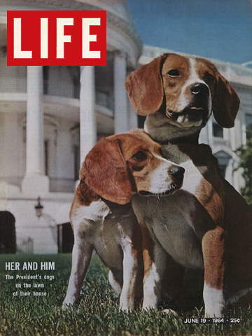 PRESIDENT JOHNSON'S BEAGLES